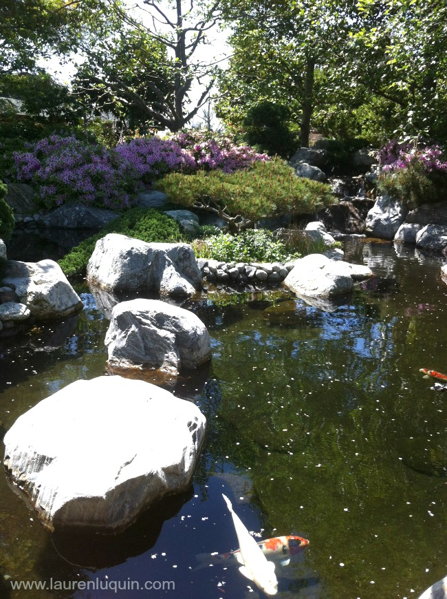 San diego archives spiral elixir for Japanese garden with koi pond