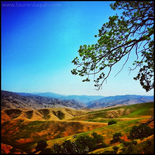 Shannon - Tejon Ranch