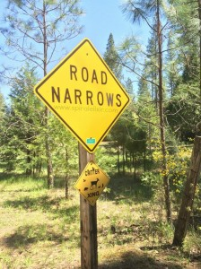 road narrows - critters crossing
