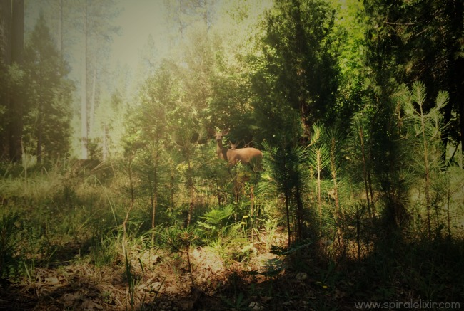 2 bucks in the forest
